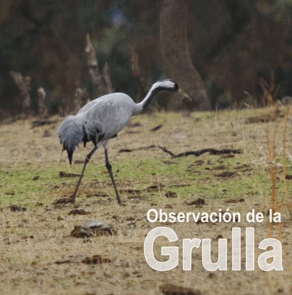 Grulla - C.R. Mirador de los Tomillos