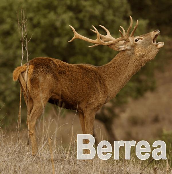 Berrea - Casa Rural Mirador de los Tomillos