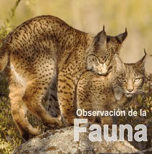 Fauna - C.R. Mirador de los Tomillos